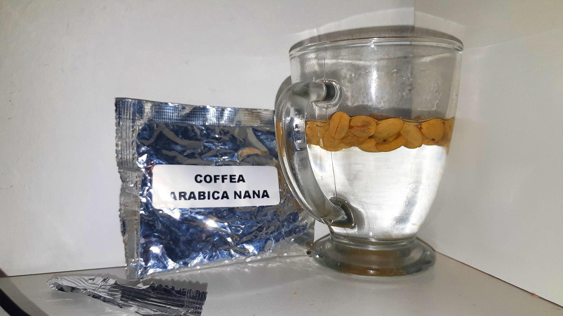 siembra de cafe, semillas de cafe en remojo