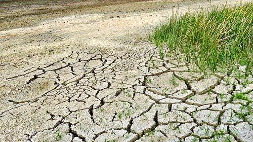 cambio climatico, rainforest alliance