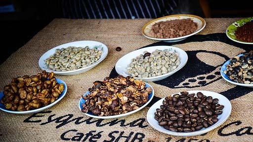 variedades de café de Nicaragua, variedades de café Nicaragüense, variedades de café en Nicaragua